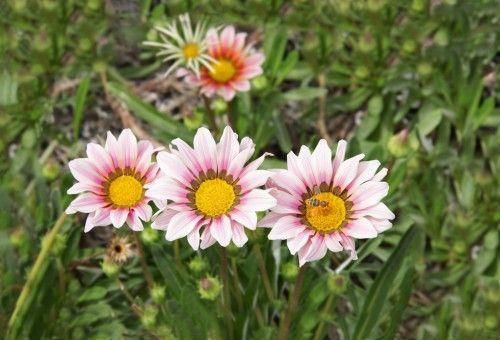 Dona Flor | Em tempo de economia de água, veja 10 plantas resistentes à seca - Dona Flor