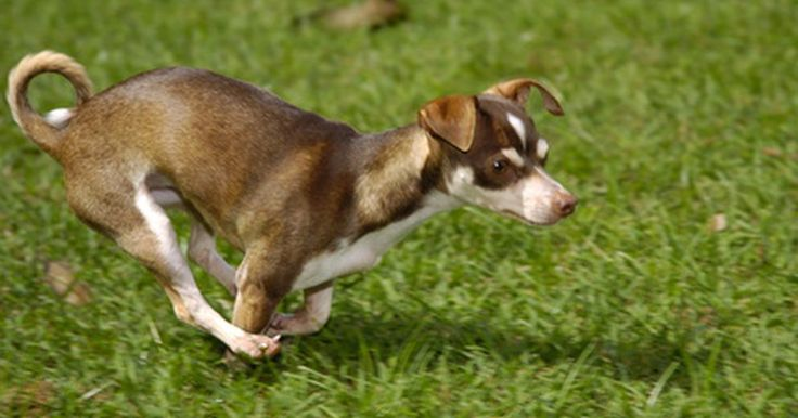 ¿El vinagre neutraliza el olor de orina de una mascota?. Para algunas personas, los animales domésticos proporcionan compañerismo y compasión para la vida cotidiana. Sin embargo, incluso los mejores amigos pueden cometer errores. Y si tu perro o gato ha orinado en la casa, tu nariz te lo dirá de inmediato. Mientras que hay un número de productos profesionales diseñados para eliminar estos olores, el ...