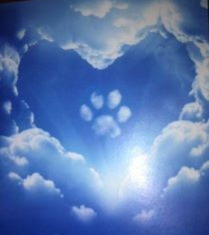 """Paw Cloud =Uma lenda indígena diz: """"Quando um ser humano morre, há uma ponte que deve atravessar para entrar no céu. Na cabeceira da ponte aguarda cada animal que encontrou o humano durante a sua vida. Os animais, com base no que eles sabem desta pessoa, decidem quais os seres humanos que podem cruzar a ponte e quais são mandados embora."""""""