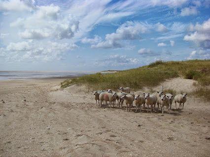 Texel Island Photos - Community - Google+ © Marlon Paul Bruin
