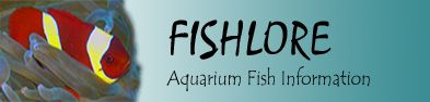 a guide to setting up your first saltwater fish tank