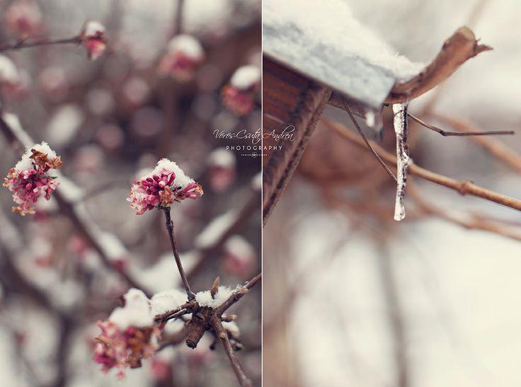 winter, snow, icicle, csutafoto