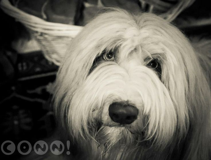 Darling Duncandonuts-Photo by Conni Freestone