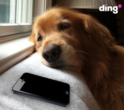Is it puppy love or true love? Whatever the relationship, don't leave them waiting for your call! #dinganimals