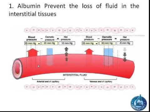 Functions of Albumin (Oncotic pressure)