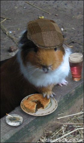 A sophisticated guinea pig enjoying a pint, some pie and a cigarette by the looks of it..