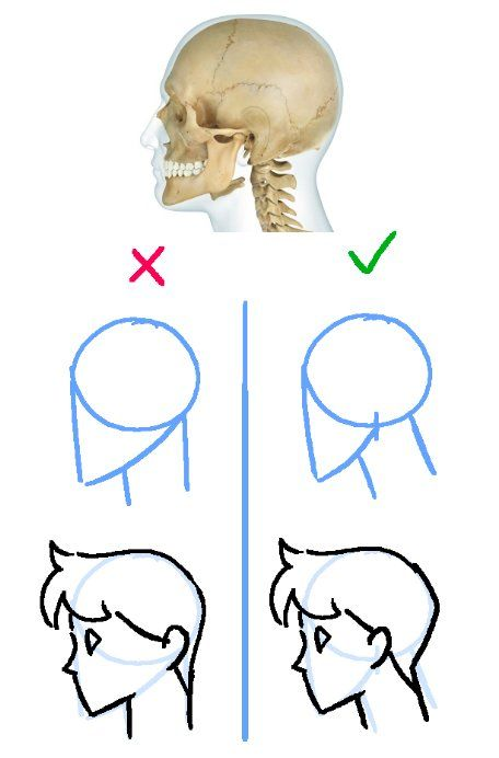 """This is a general art tip, if your characters look strange from the side it might be because you're used to drawing them head-on and forget to add their entire skull when you draw them in profile! Makes a huge difference."""