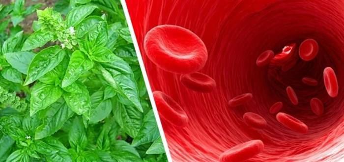 Η Αντιοξειδωτική Ασπίδα του Βασιλικού που Καθαρίζει το Αίμα από τις Τοξίνες & Ρίχνει τη Χοληστερίνη  #Υγεία