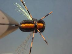 cicada flies | periodical cicadas are commonly called or referred to as 17
