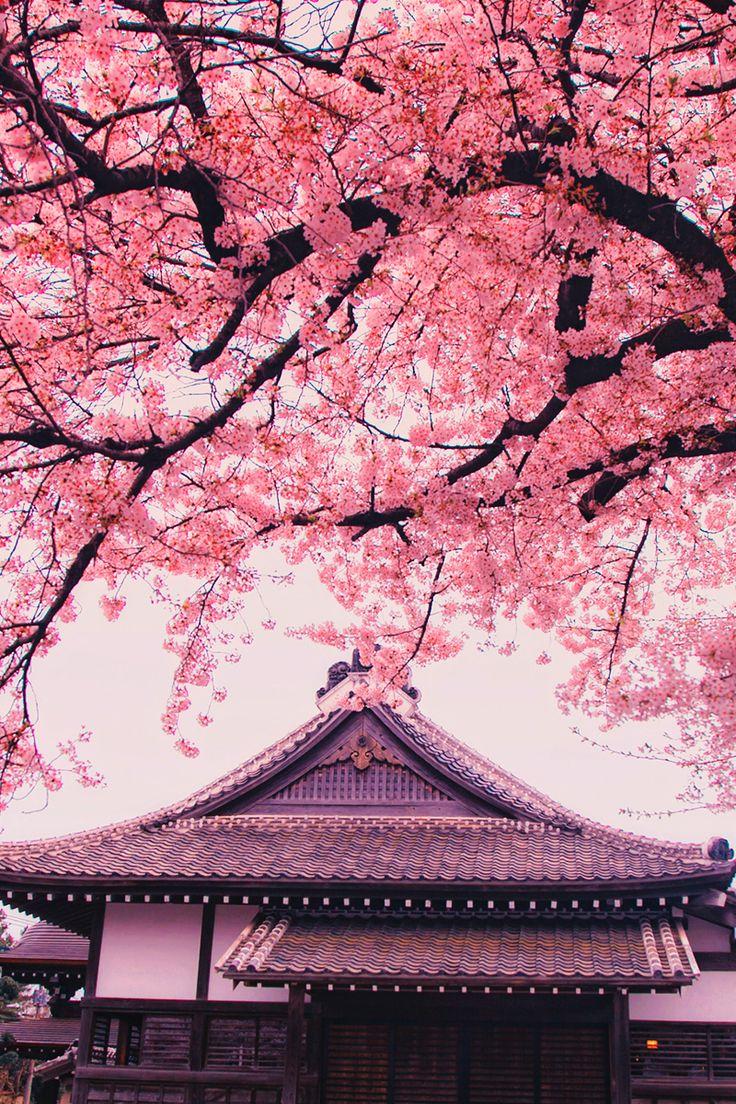 Under The Pink | Hanson Mao