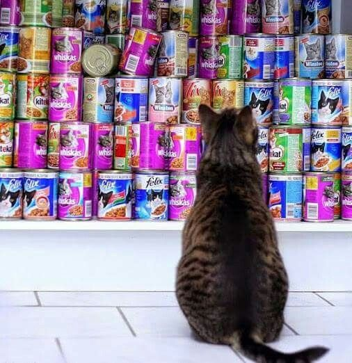 """""""This is not the cat food I like, Helen!  It causes hair balls!"""""""