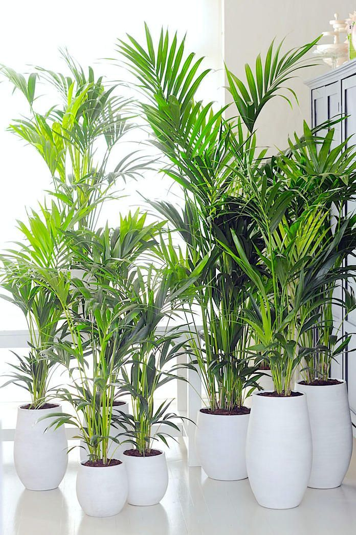 The Top 10 Green Plants For The Room Green Indoordesign Plants
