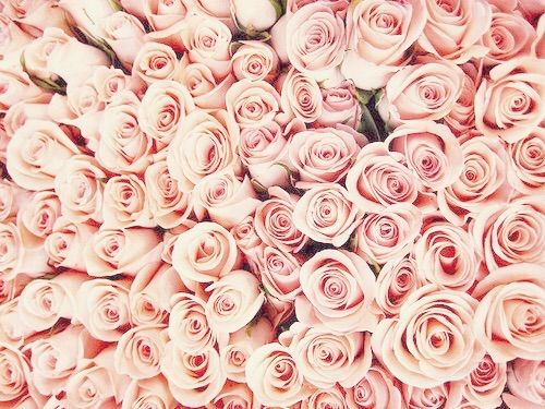 Image via we heart it beautiful flowers love pink - Light pink background tumblr ...