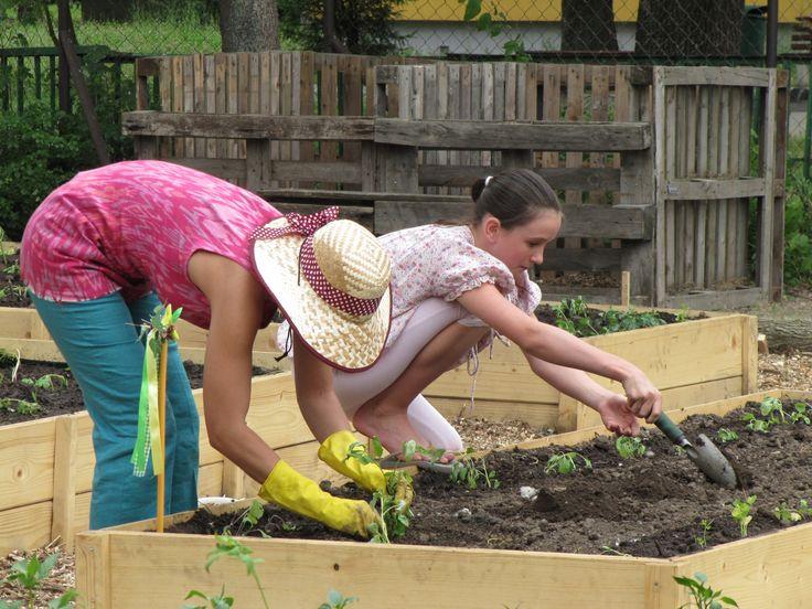 A Városi Kertészek Program 18-40 közötti fiatalok részére biztosít ingyenes lehetőséget a kertészkedés elméleti és gyakorlati alapjainak elsajátításához. http://balkonada.cafeblog.hu/2014/09/28/jelentkezz-a-varosi-kerteszek-programra/