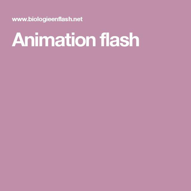 Animation flash