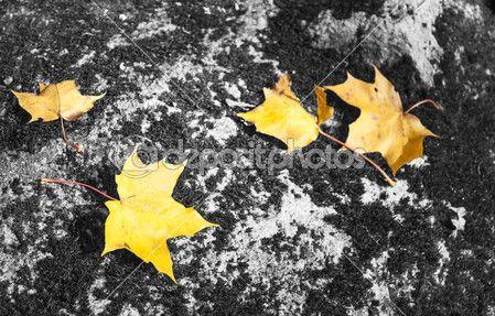 Hojas de arce amarilla sobre roca — Foto de Stock