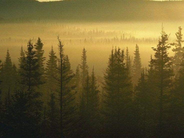 fotografias de bosques   Fotos de Bosques. Bajalos gratis. - Bosque 015
