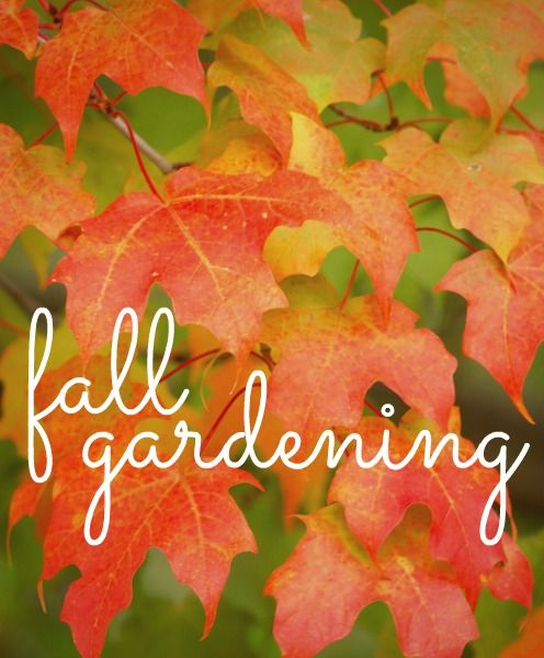 All about Fall gardening!
