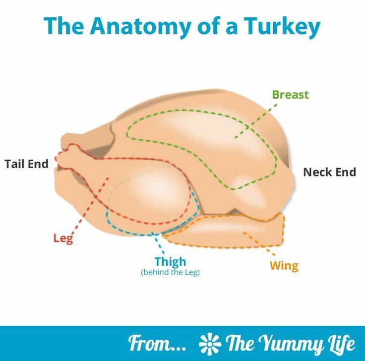 Fancy Male Turkey Anatomy Frieze - Human Anatomy Images ...