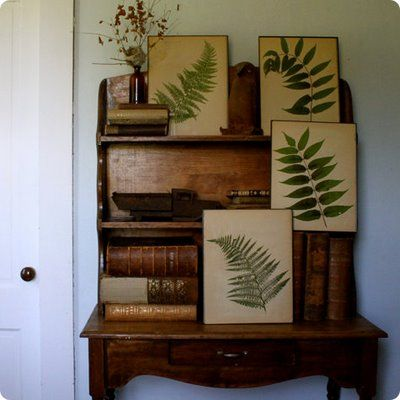 Beautiful collection of framed ferns resting randomly on wooden desk and shelves with warm patina.