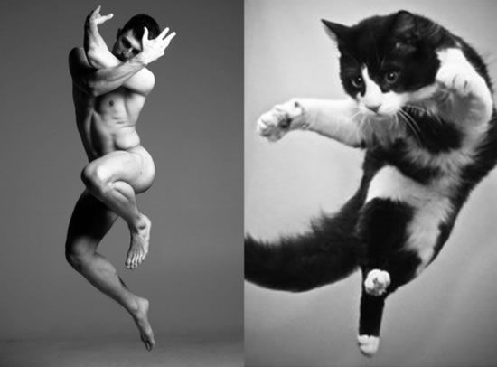 20 Cats Posing As Male Models 15