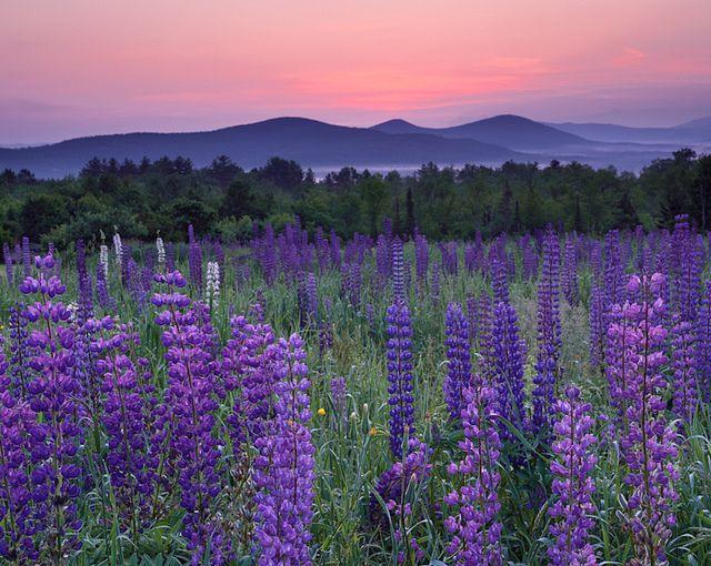Рассвет в белых горах: Шугар Хилл, Нью-Хэмпшир, Майк Бланшетт