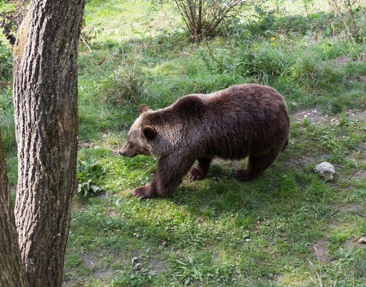 https://flic.kr/p/M3fPvK   Bärner Bär   Bärenpark Bär