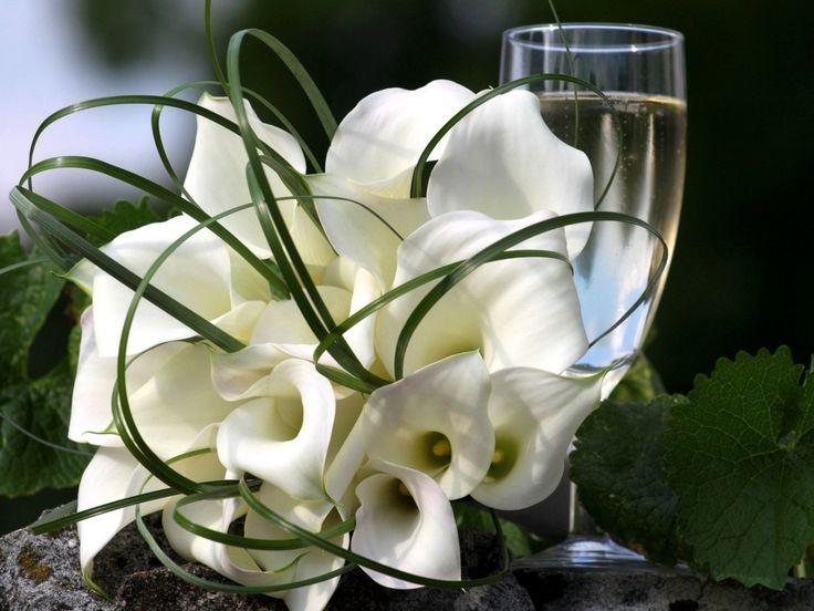 kukkia kuvia, calla liljat taustakuvia, koriste vektori, lasi valokuvia, kimppu taustat, stone kuvat, lehdet materiaali
