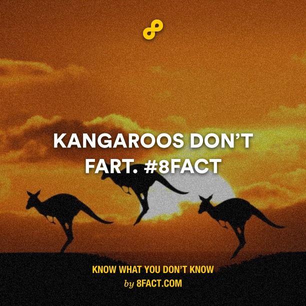 Kangaroos don