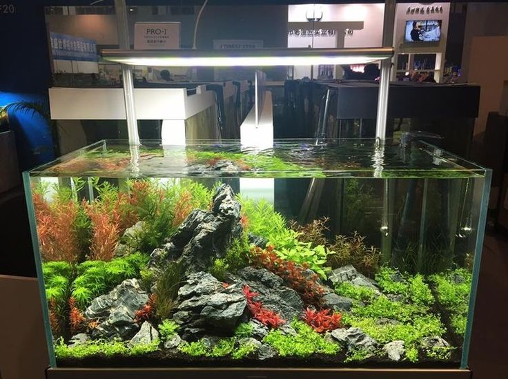 Tank planted www.ibrio.it your aquarium born here ! il tuo acquario nasce qui ! https://www.facebook.com/ibrio.it #ibrio #acquario #acquari #acquariologia #acquariofilia #aquarium #aquariums #piante #natura #pesci #zen #design #arredamento #layout #layouts #layoutdesign #roccia #roccie  #moss #freshwater #plantedtank #aquadesignamano #tropicalfish #fishofinstagram #aquaticplants #natureaquarium #nanotank #reefkeeper #nanoreef #saltwateraquarium