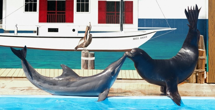 Gulf World Marine Park In Panamacitybeach Creates Memories For Your Entire Family You Ll See