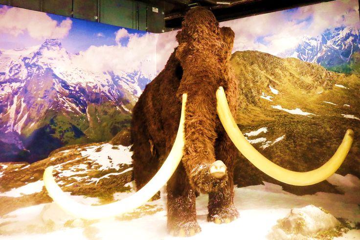 Mammoeten waren net als de huidige olifanten heel sociale dieren. Net als bij olifanten groeiden de jongen op in familiegroepen van vrouwtjes die door een ervaren matriarch werden geleid. Wanneer stieren de puberteit bereikten, gingen ze alleen of in groepjes van twee of drie rondzwerven. Bij gevaar beschermden de moeders, tantes en grootmoeders de jongen. Een dode mammoet was niet alleen goed om op te eten. Mensen in de ijstijd gebruikten het hele dier.