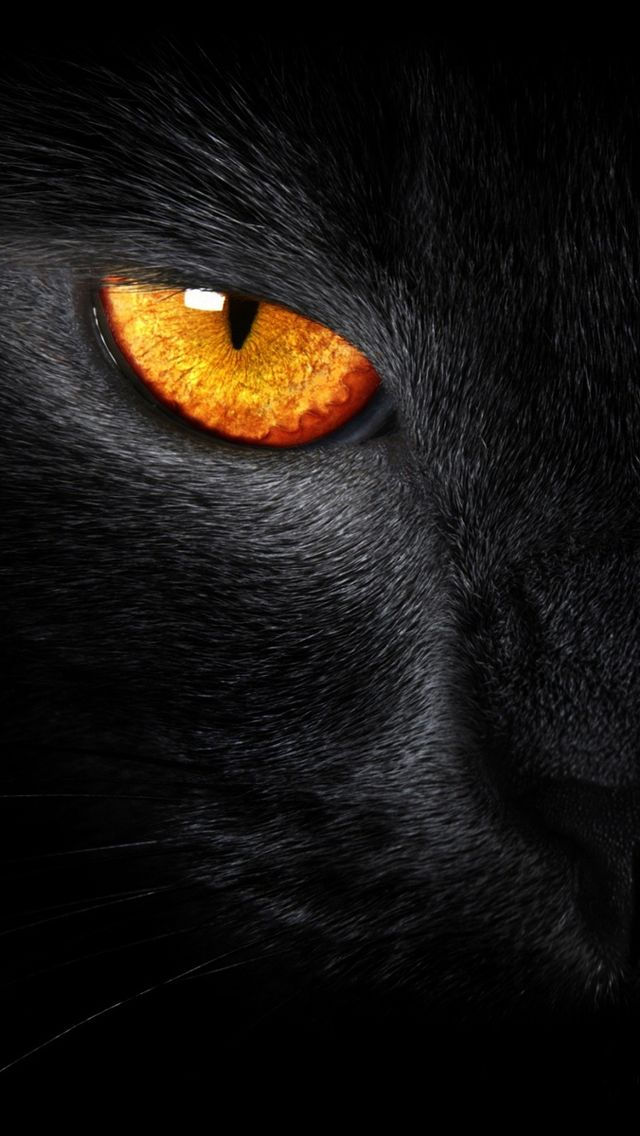 Black Cat Evil Eye iPhone 5 Wallpaper