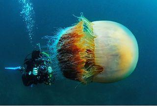 Αuto  Planet Stars: Υποβρύχιες φωτογραφίες αποκαλύπτουν τον… τρομακτικ...