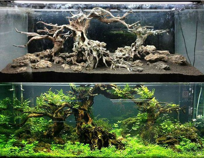 3102 best aquascape images on pinterest aquascaping for Design aquarium