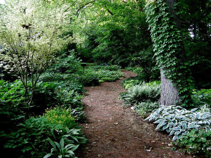 Path design mulch flanked with lush plantings for for Woodland garden design