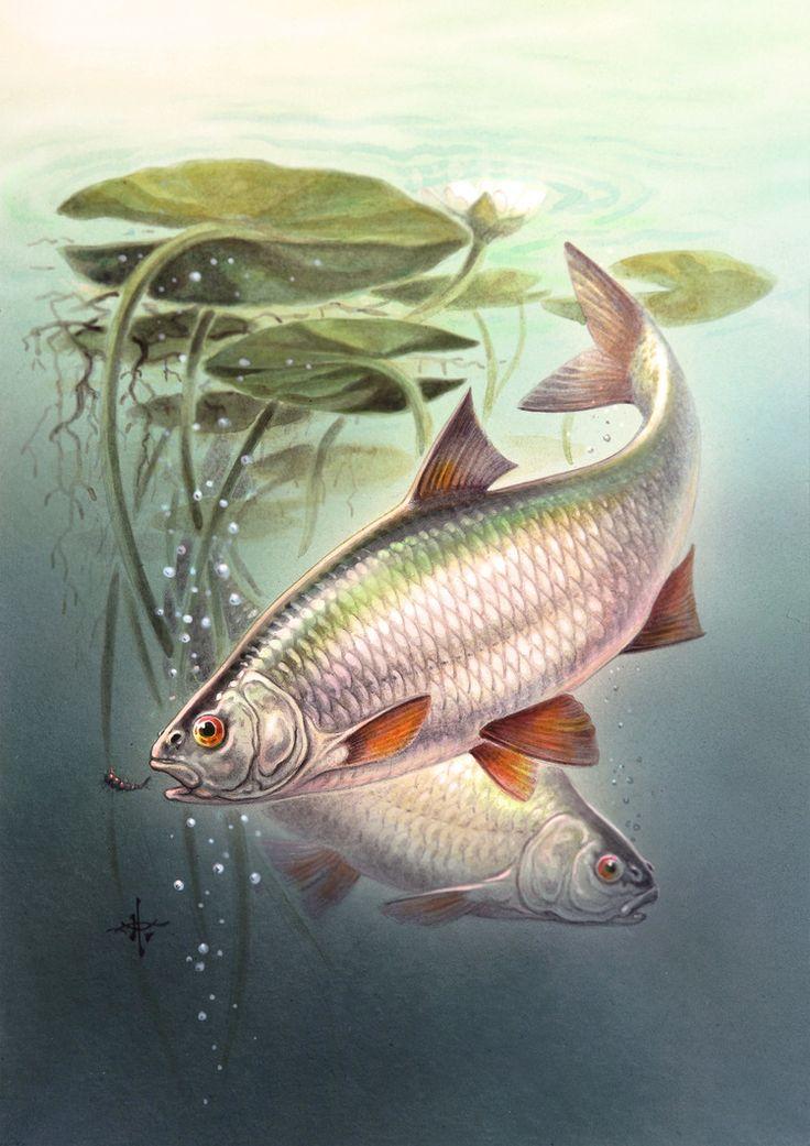 рисунки речных рыб картинки устранить