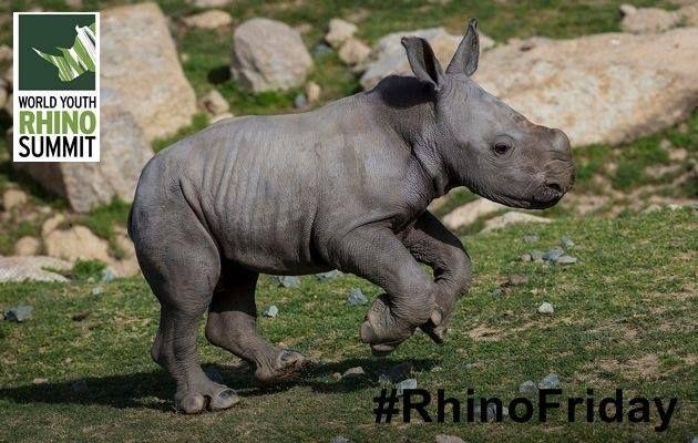 We love RHINOS! #rhino #nature #wildlife #RhinoSummit
