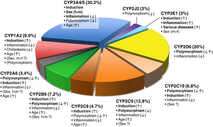 Cytochrome P450 enzymes in drug metabolism: Regulation of gene expression, enzyme activities, and impact of genetic variation