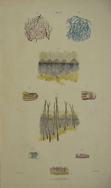 [An Anatoical Illustration Of A Fingertip, Showing Follicles And Nerves Amongst Other Things, Plate 38] by William Fairland after William Bagg.