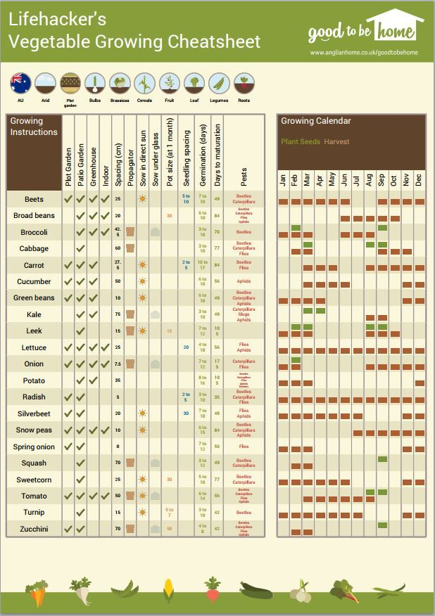 Create A Personalised Vegetable Gardening Cheat Sheet With This Online Tool | Lifehacker Australia