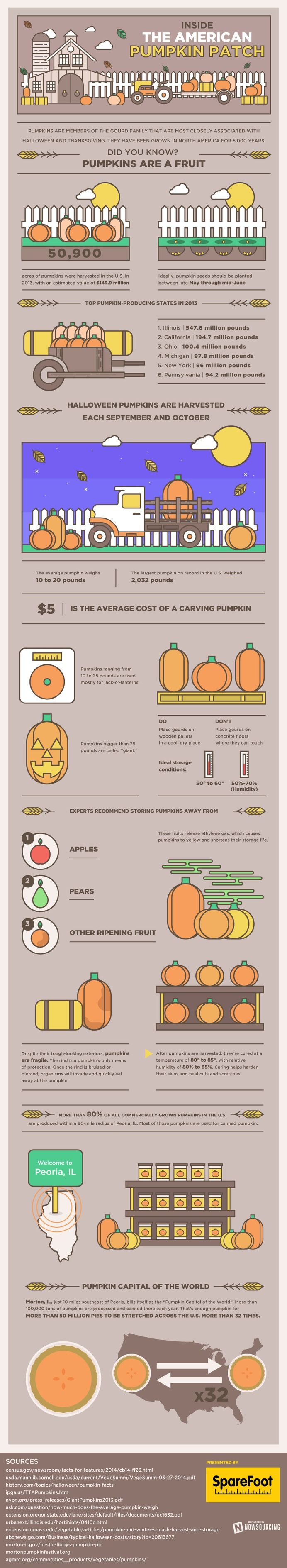 Learn all about pumpkins from this infographic. You might be surprised what a big business they are! — Designspiration