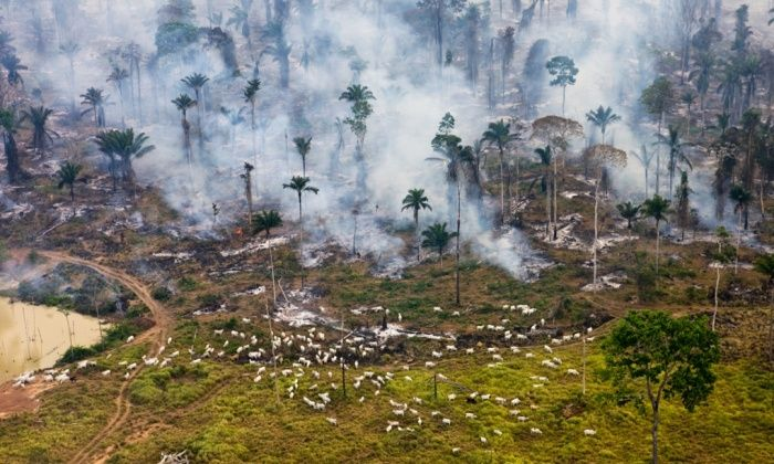 Cows and smoke Ground zero in the war on nature – cattle graze among the burning Amazon jungle in Brazil   'Throughout history human exploitation of the earth has produced this progression: colonise-destroy-move on.' Garrett Hardin Photograph: Daniel Beltra