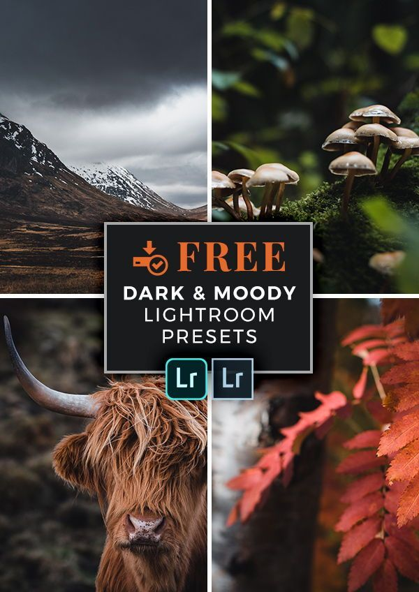 Download Preset Lightroom Free