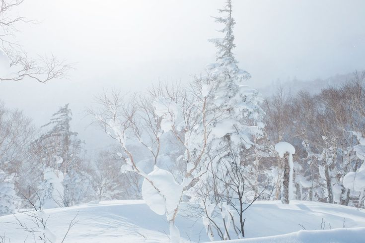 With an average annual snowfall of 15 meters, it's clear why Hokkaido is  known as one of the hottest ski destinations in the world. Located in  northern Japan, the island gets the cold air from Siberia across the Sea of  Japan, which results in the ski resorts being absolutely DUMPED with dry  powder.