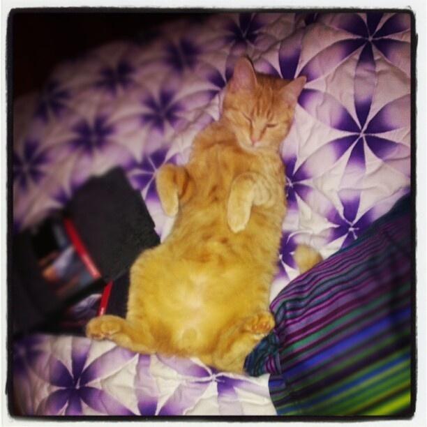 cat on a blanket -Favorite Things, Cutest Fur, Fur Baby, Brenna Favorite