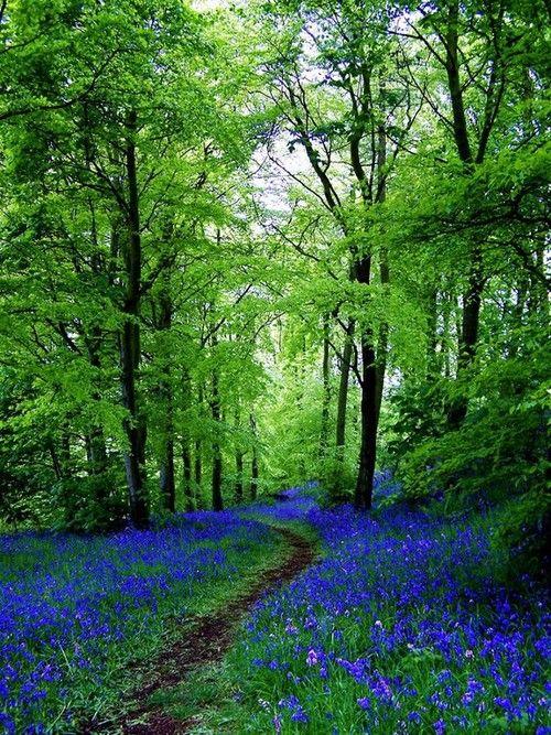 Bluebell Path - Fife, Scotland - Forest Garden