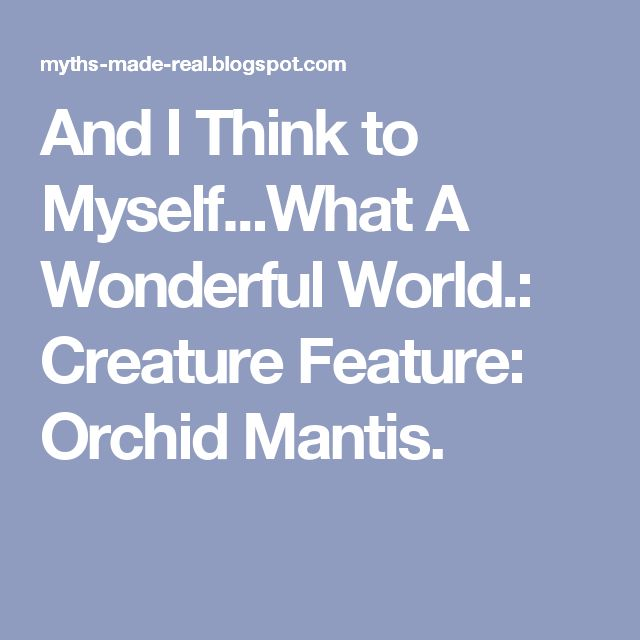 And I Think to Myself...What A Wonderful World.: Creature Feature: Orchid Mantis.