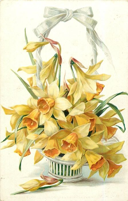 Basketful of yellow daffodills ~ 1908