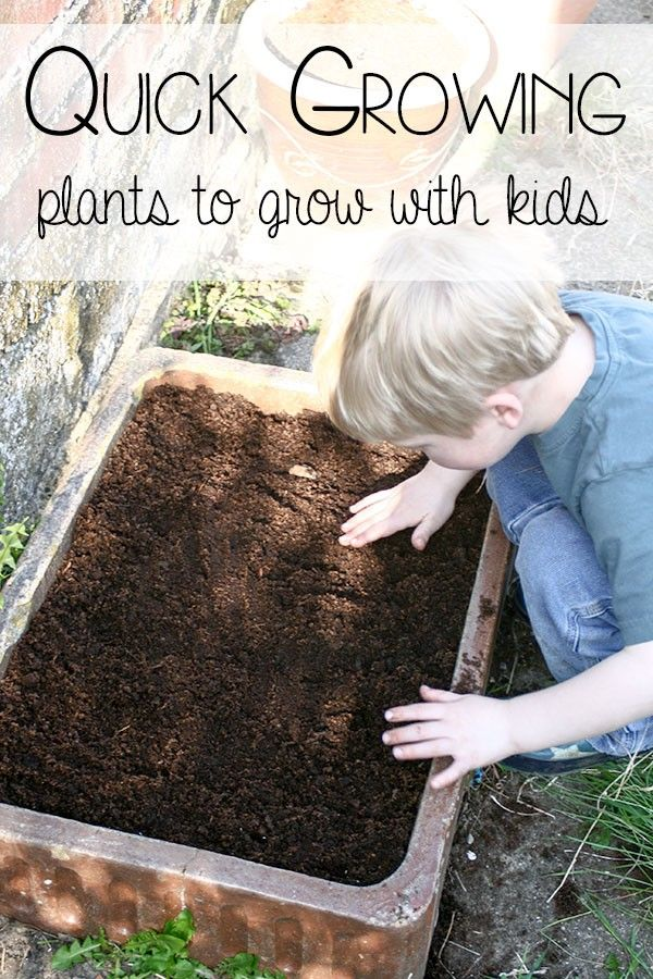 Quick growing plants to grow with kids - ideal for home or school.